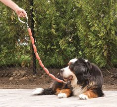 awesome hot dog leash. Would be so funny if you have a wienie dog