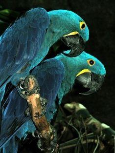 beautiful aqua color palette parrot pair
