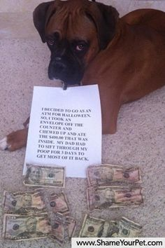 """""""I decided to go as an ATM for Halloween. So I took the envelope off the counter and chewed up and ate the $400.00 that was inside. My dad had to sift through my poop for 3 days to get most of it back."""" ~ Dog Shaming Boxer   Funny Picture Dump Of The Day – 53 Pics"""