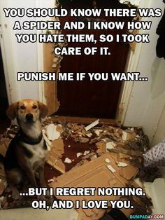 Not only are you not punished,  here's your very own steak, and I love you more for killing a spider. funny puppie quotes, funny dogs, animals funny quotes, killing spiders funny, funny dog stuff, dog houses, dog funnies, funny dog quotes, dogs quotes funny