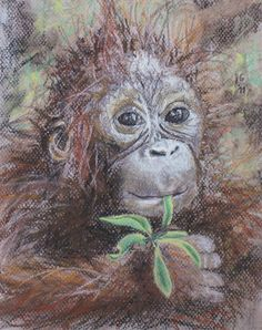 For the love of Orangutans