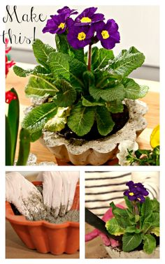 How to Make a DIY Concrete Planter (http://blog.hgtv.com/design/2014/04/08/diy-concrete-planters/?soc=pinterest)