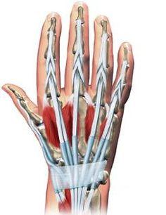 wrist and hand rehab protocols