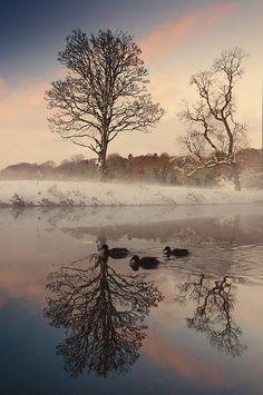 duck swim, river lagan, belfast, gerard landscap, ducks, rivers, bridges, landscap photo, drum bridg