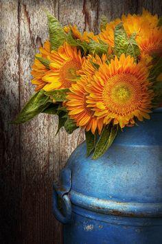 orange sunflowers with antique blue milk container