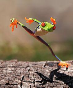kungfu, anim, ninja, froggi, funni, tree frog, kung fu, frogs, thing
