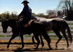 Spring Horse-Training Tip: Ponying horses can be a great training opportunity. For other horse-training ideas, check out http://americashorsedaily.com/.