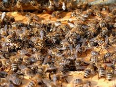Differences+Between+Bee+Pollen,+Royal+Jelly+and+Propolis+