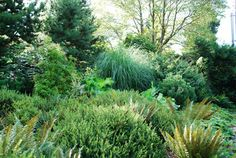 Ferns and grasses. Rhubarb?  The Intercontinental Gardener: October 2008