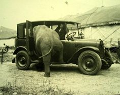 You never get to see elephants going for a Sunday drive anymore. | 40 Pictures That Show Just How Much The World Has Changed