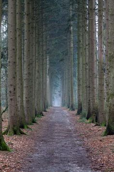 Through the pine trees...  Ahhhh!!!    I love, love, love pines!   I've always wanted a pine lined driveway!