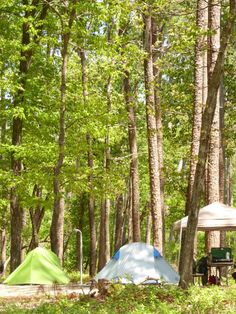 Campground at Goose