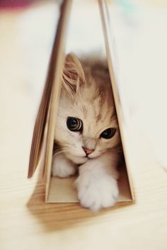 Awe what a cute kitten!