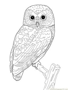 Printable Owl Coloring Page | Coloring Pages Owl (Birds > Owl) - free printable coloring page online