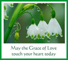 May the grace of Love touch your heart today.