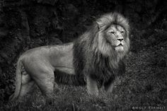 BORN TO BE WILD by Wolf Ademeit, via 500px