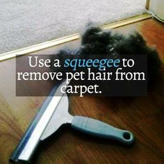 Use a Squeegee to remove pet hair from carpet...