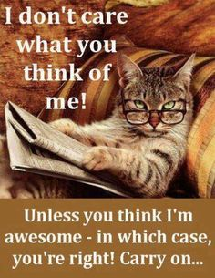 I dont care what you think about me funny quotes memes quote cat meme lol funny quote funny quotes humor