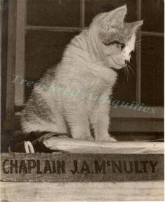 1940s WWII US Army Chaplain McNulty American Tabby Cat Kitten Desk Photo 10x8 | eBay