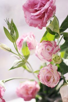 Pink Lisianthus: all year