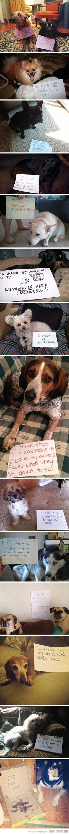 dog shaming - so funny