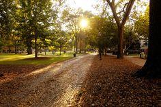 Fall on the Horseshoe at the University of South Carolina.