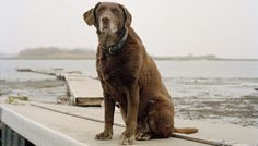 9/11 search dogs