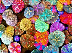 painted sand dollars ♥