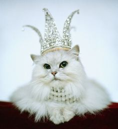the queen of everything...