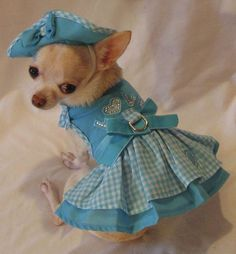 Cute Gingham Dog Outfit