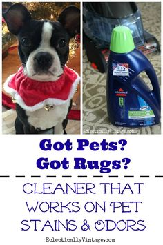 Pet Rug Cleaner - ge