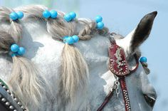 The Ban-ei horse is a blend of Percheron, Belgian and Breton blood