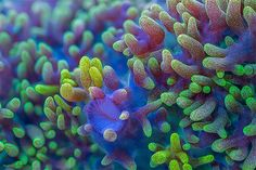 Slow Life: Macro Time-lapse of Corals by Daniel Stoupin