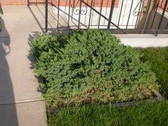 Deep root fertilization- feed and protect perennials, shrubs and trees from harmful insects