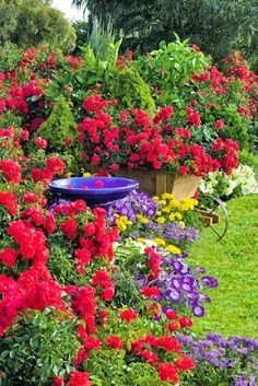 Beautiful flower garden <3