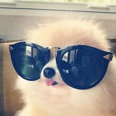 Cute Dog Wearing Sunglasses
