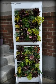 Plantation Shutter Planter– DIY Tutorial for the project I shared on Studio 5 today.  Surprisingly easy vertical green wall!