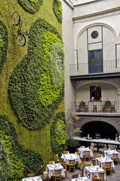 Green Wall- Mexico City