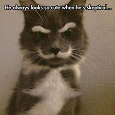 crazy cats, funny animals, hipster, eyebrow, funny cats, funny pictures, moustaches, kitty, grumpy cats