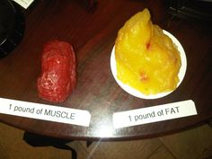 One pound of muscle, one pound of fat. Grosss.