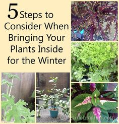 A few helpful tips on what to consider when bringing your plants indoors as the weather turns colder. www.gardenmatter.com