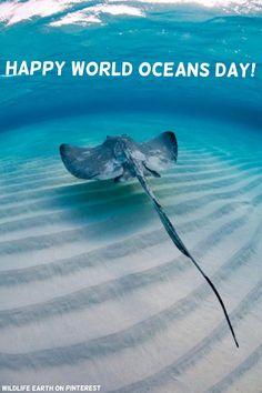 Happy World Oceans Day