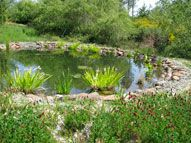 Ponds for fish, water storage, habitat etc- by Permaculture Artisans