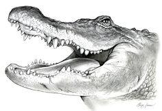 American Alligator Pencil Sketch by gregchapin.deviantart.com on @deviantART