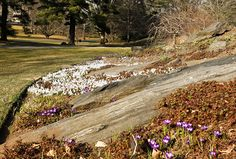 Squills and Crocuses on Wamsler Rock