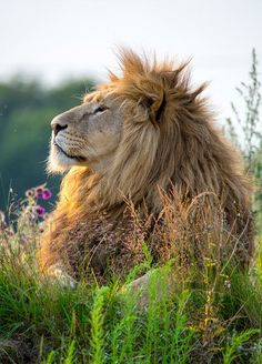 His Majesty, The King