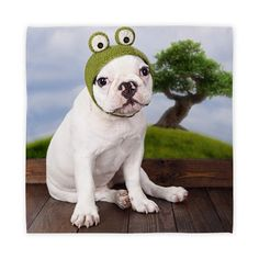 funny_french_bulldog_puppy_with_a_frog_hat_cloth.jpg (460×460)