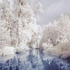 winter trees, dream, snow, winter wonderland, frost