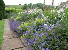 Love this perennial border.