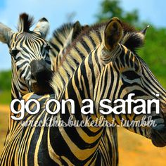 Mostly because... Zebras ! c: